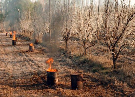 La Nación declaró la emergencia agropecuaria en la provincia