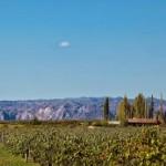 Viñas-sanrafael