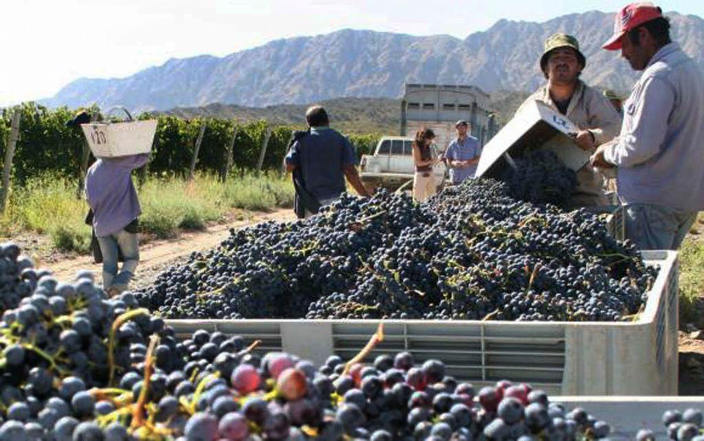 Cosecha 2018: más uva que el año pasado pero lejos de las mejores vendimias