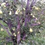 publicacion face fruta