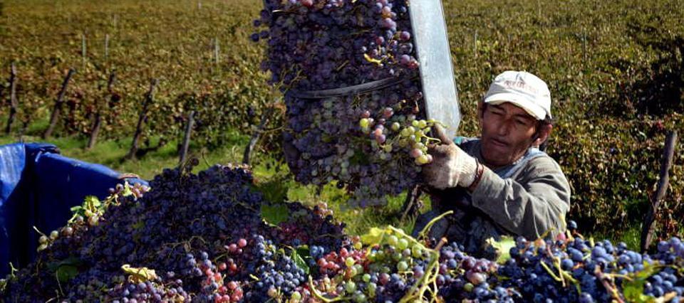 Productores buscan reconvertir sus cultivos