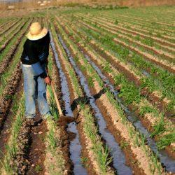 Capacitación sobre Agro Negocios Innovadores y Sustentables
