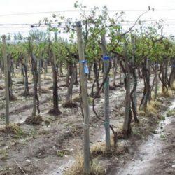 San Rafael necesita una política agraria permanente