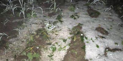 Graves daños por el granizo en Alvear