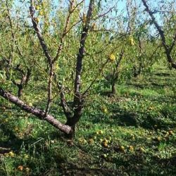 El HCD solicita subsidio para productores declarados en emergencia agropecuaria