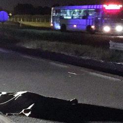 Una pasajera murió en un micro y los choferes dejaron el cuerpo al costado de la ruta