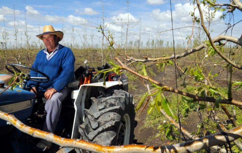 Declaran la emergencia agropecuaria en Mendoza