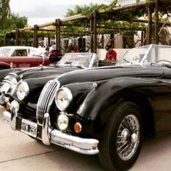 Rally de las Bodegas: autos antiguos por los caminos del vino