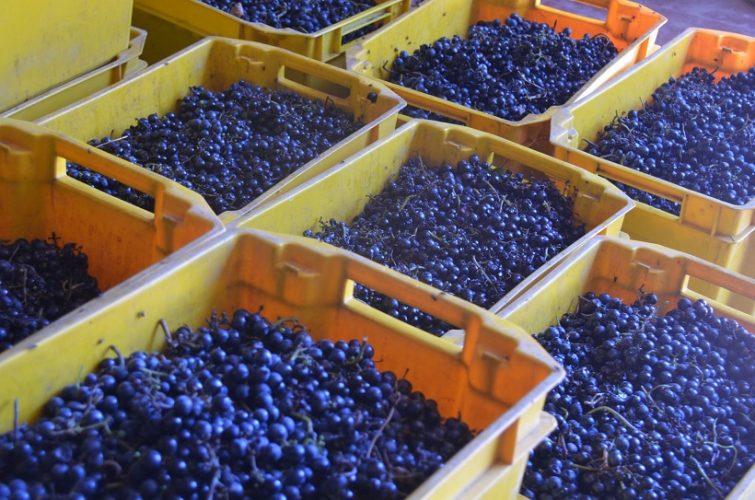 San Luis se suma a la vitivinicultura