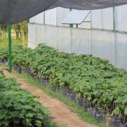 Alvear busca implementar el Proyecto Paulownia que ya es un éxito en San Luis.