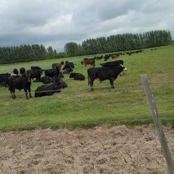 Expandir la ganadería, una oportunidad y una necesidad de Mendoza