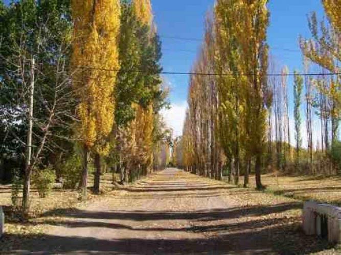 Pronóstico y estado de caminos