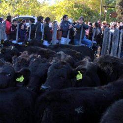 Alvearense  sufrió  estafa millonaria en La Pampa