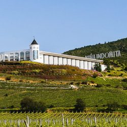 La mayor vitivinícola china llega a Chile