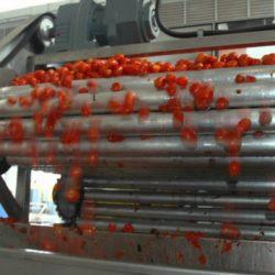Empresas de Mendoza y San Juan sellan alianza en el sector tomatero