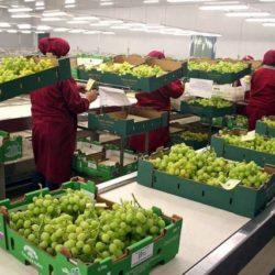 Preinscripción de productores de uva en fresco para exportar a China
