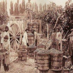 """""""Mendoza es conocida como el corazón de la vitivinicultura"""""""