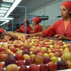 Controlan fábricas elaboradoras de dulces y mermeladas