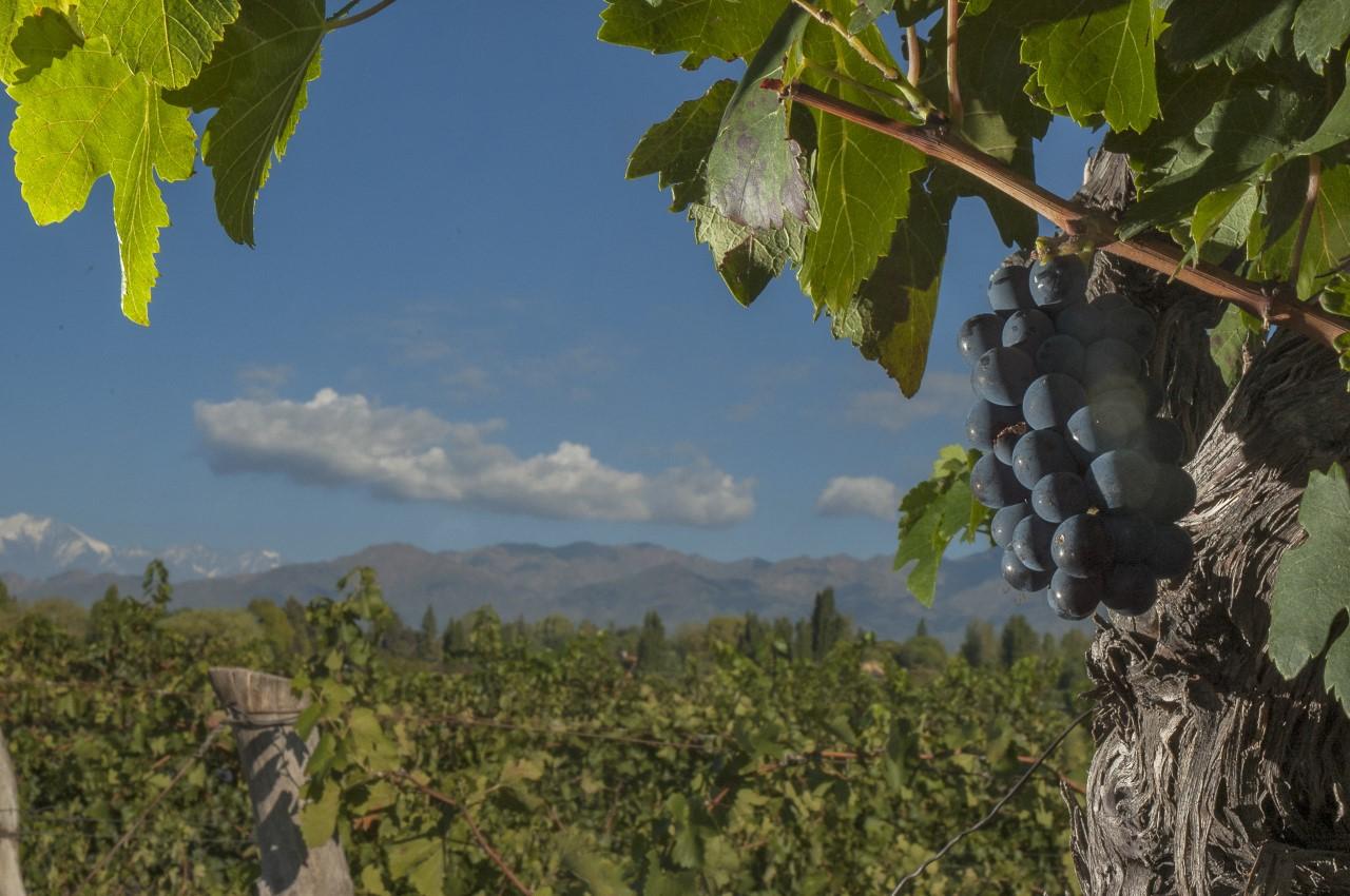 El viejo mundo del vino llega al nuevo mundo d a del sur Noticias del dia en el mundo del espectaculo