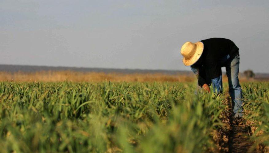 Creció  6% cultivo de hortalizas de invierno esta temporada