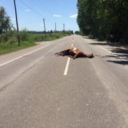 Un auto arrolló un caballo