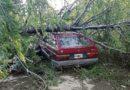 Se tragó el árbol