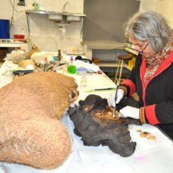 Revisa la Arqueóloga Delaveris restos prehispánicos momificados
