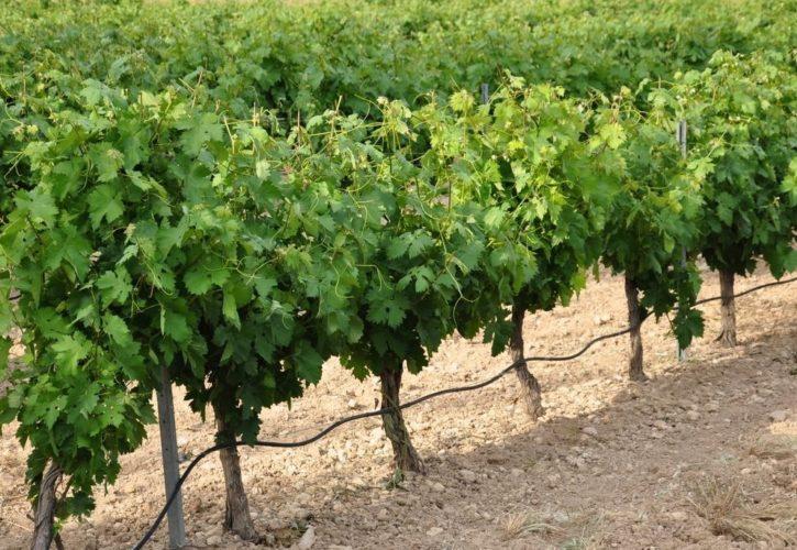 Productores vitivinícolas preocupados por el aumento del combustible