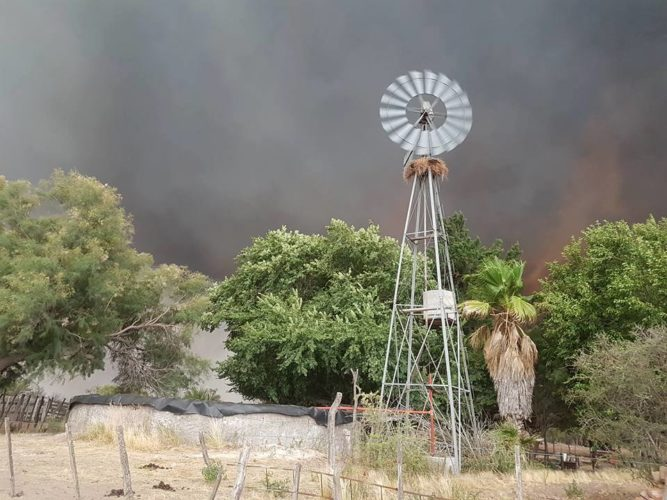 Incendios: guardia de cenizas