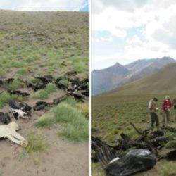 Agrotóximos amenazan la salud humana y la supervivencia del Cóndor Andino