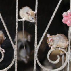 El templo de las ratas y 6 lugares en la India que te perturbarán