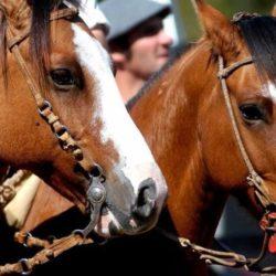 Implementarán el Documento Único Equino en la provincia de Buenos Aires