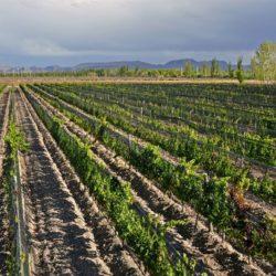 El enoturismo crece en la Argentina a una tasa promedio del 6% anual