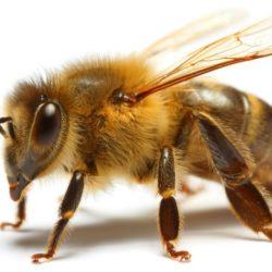 A sembrar para proteger las abejas