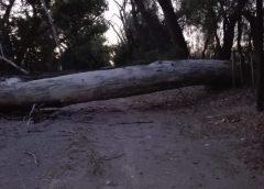 Fuerte viento derribó árboles